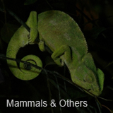 Mammals & Others