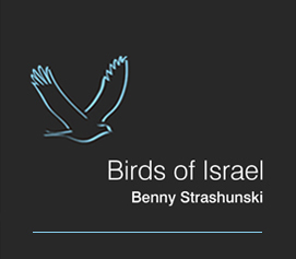 Birds of Israel